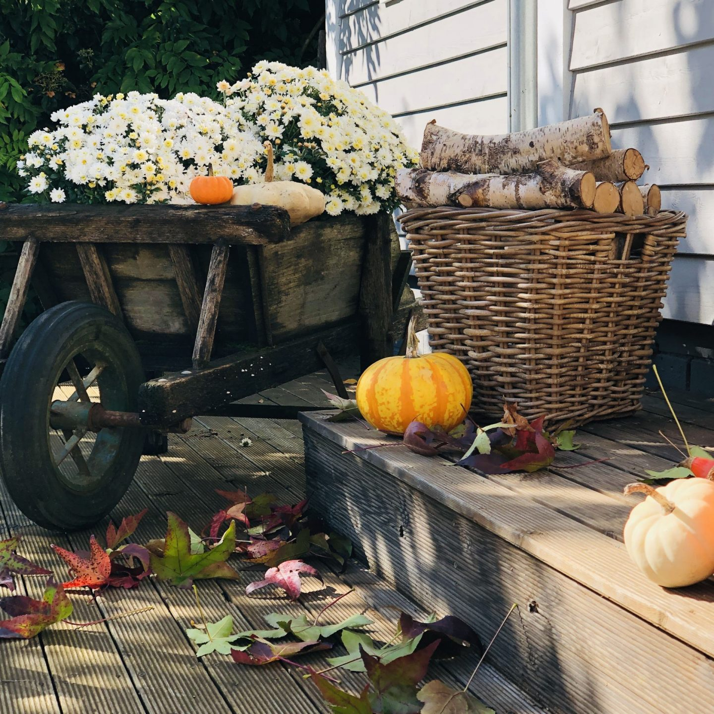 Wheelbarrow with asters and pumpkins.