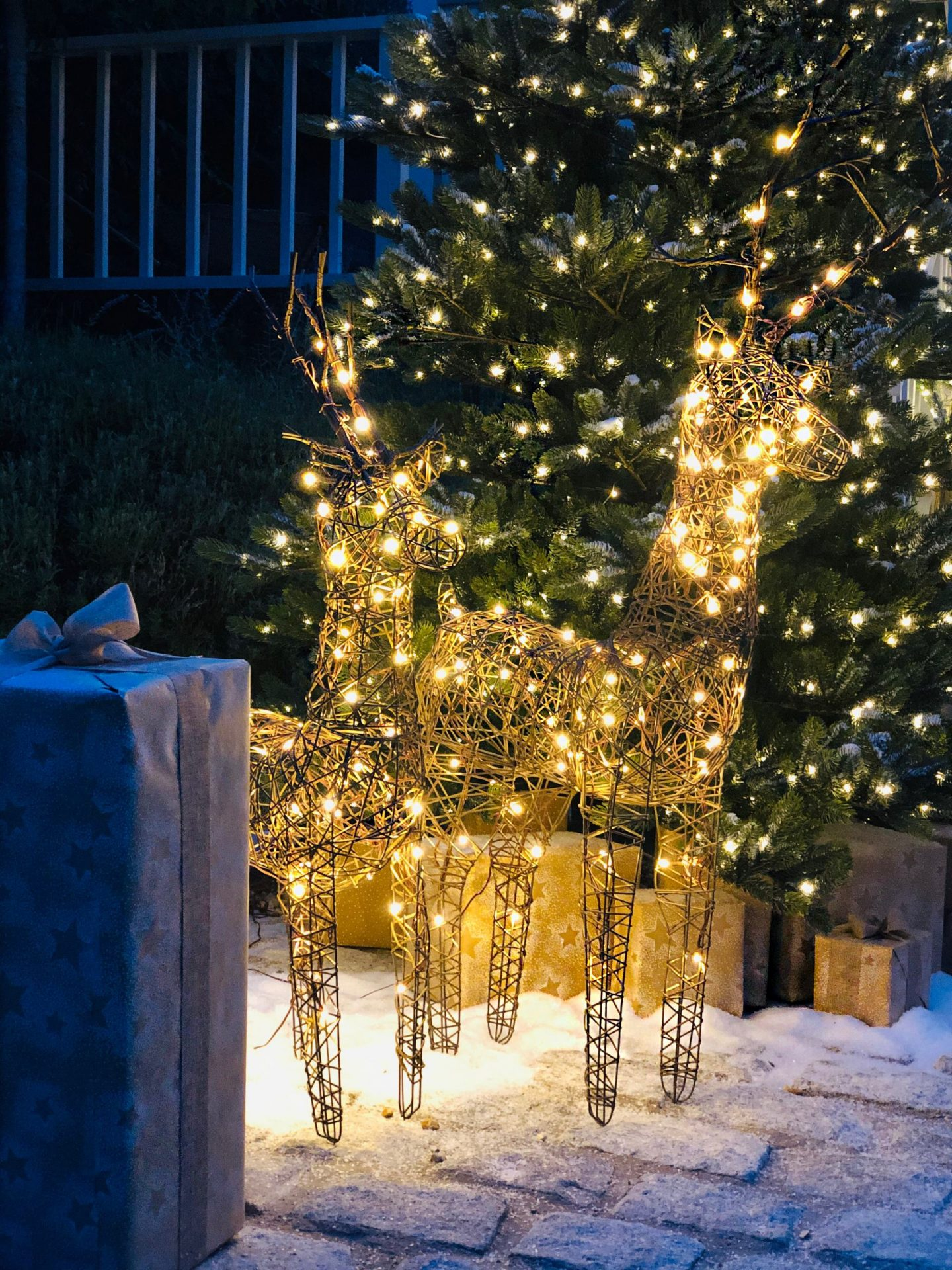 Light up reindeer by Cox & Cox